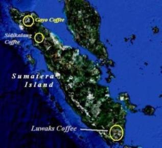 Luwaks Coffe Origin Area at The Southern Tip of Sumatera Island